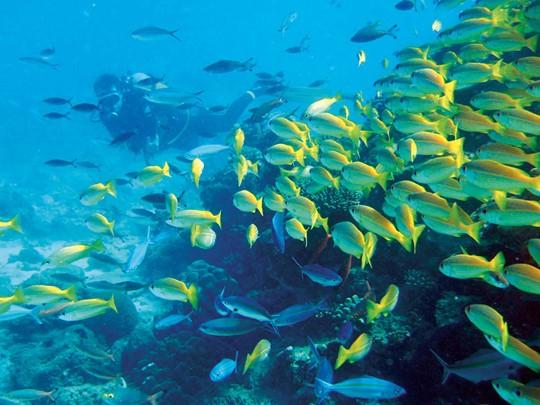 Explorez les fonds marins de l'île de Tsarabanjina