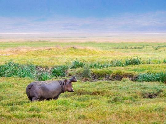 Séjour à Ngorongoro