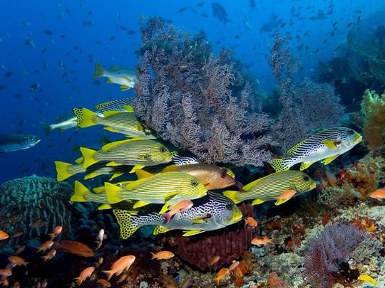 Les eaux du Parc Komodo offrent une variété d'espèces remarquables.
