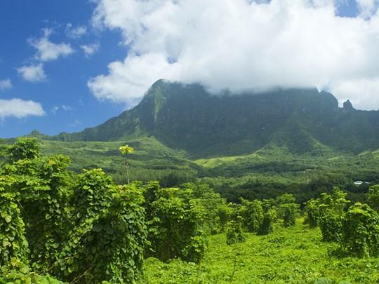La végétation luxuriante de Raiatea