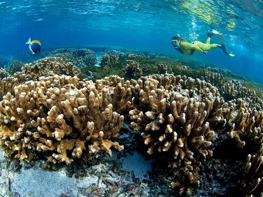 L'îlot Saint Pierre est un petit joyau à découvrir, notamment ses fonds marins d'une richesse exceptionnelle