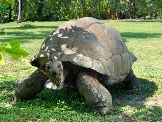 Explorez l'île de Cousin, une réserve naturelle, les tortues sont rois