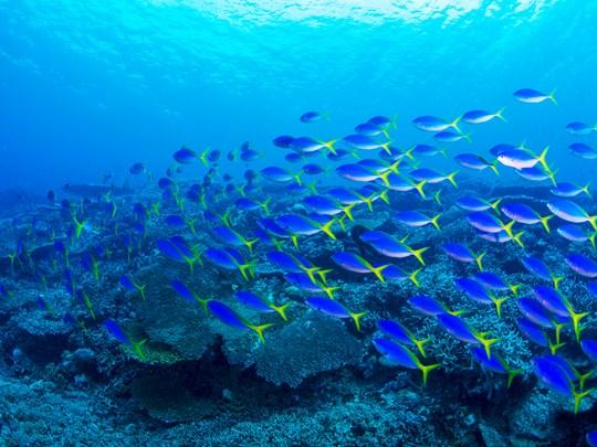 Explorez les fonds marins foisonnants de Rangiroa
