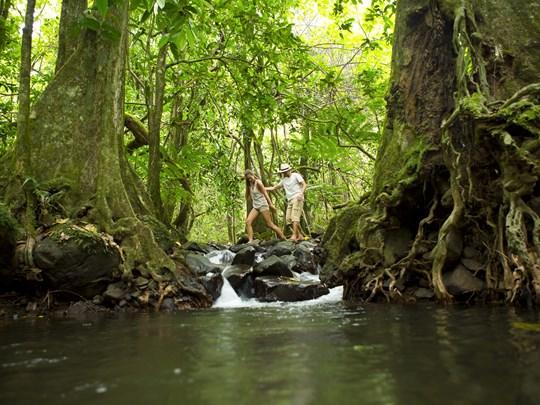 Aventurez vous dans la végétation luxuriante de Moorea