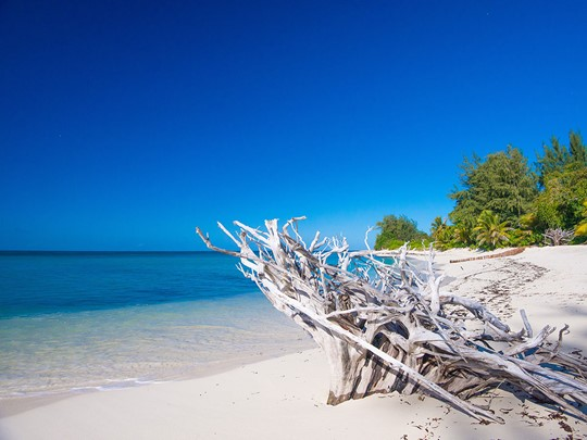 Le Denis Private Island est une île où dominent nature et tranquillité