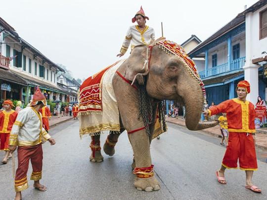 Parade d'éléphant lors du nouvel an