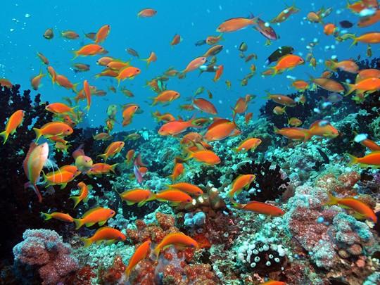 Le Dhigali fera le bonheur des passionnés de fonds marins