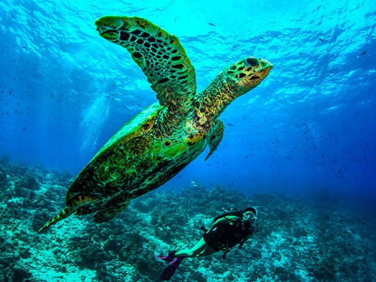 Plongez dans les fonds marins de l'atoll de Baa