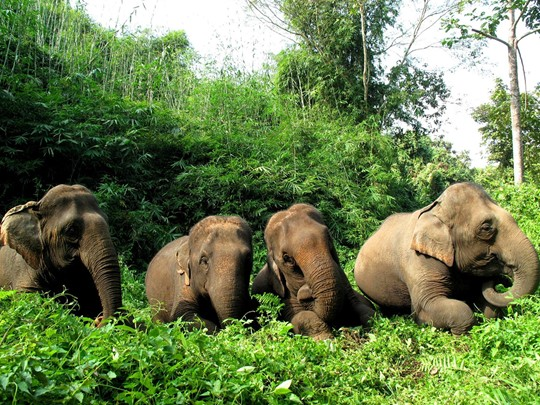 Découvrez le monde merveilleux des éléphants au Four Seasons