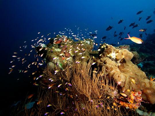 Explorez les fonds marins de l'atoll d'Haa Alifu