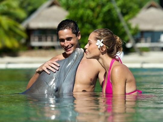 Découvrez l'incroyable Moorea Dolphin Center en Polynésie