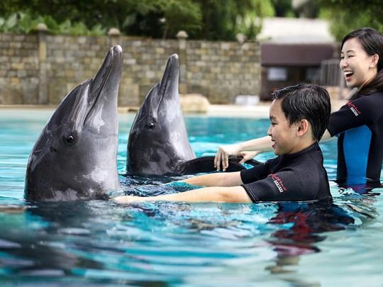 Nagez avec les dauphins de Dolphin Island