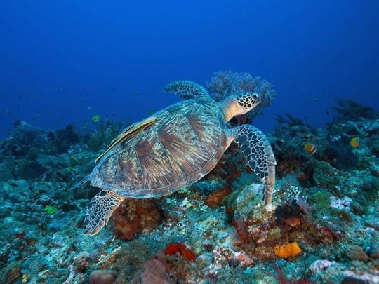 Lombok, île authentique de l'archipel de la Sonde est la porte d'entrée pour un voyage plongée aux îles Gili