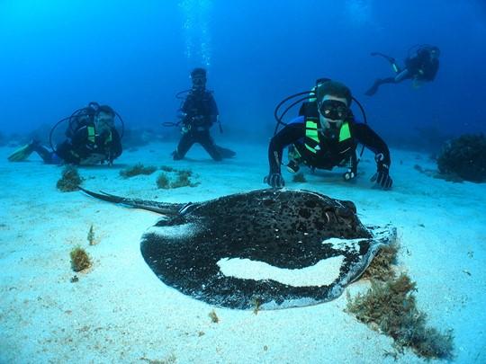 Explorez les fonds marins de l'île Maurice