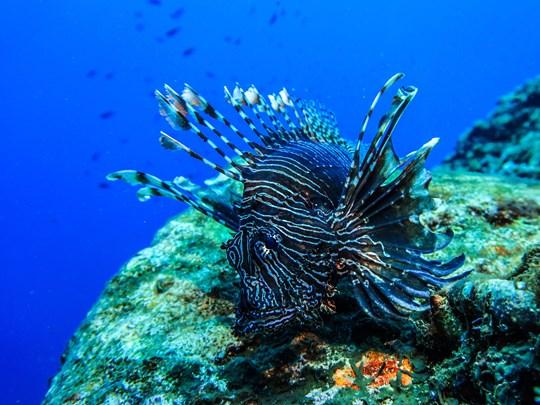 La faune subaquatique de Bali