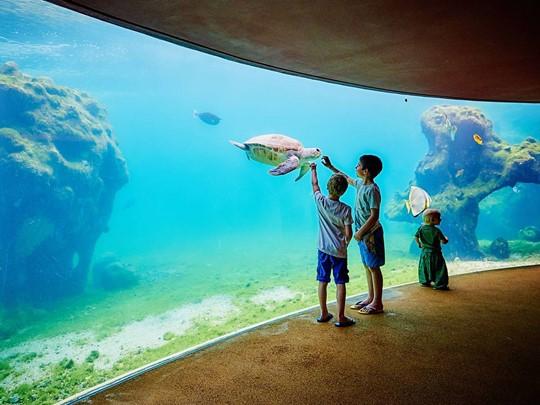 Kélonia est à la fois un aquarium, musée, et un centre de recherche, d?intervention et de soins consacré aux tortues marines