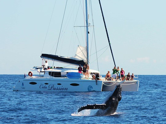 Prenez le large à bord d'un catamaran, et découvrez l'île de la Réunion autrement