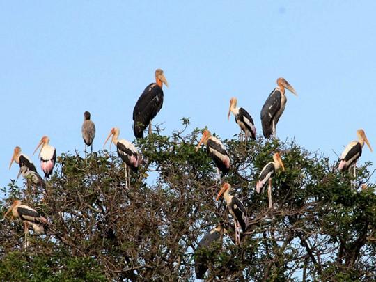 Découverte des espèces d'oiseaux menacée dans la réserve de Prek Toal