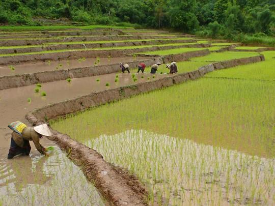 Pause nature à découverte des environs, du vert intense des rizières à la riche forêt de Muang La
