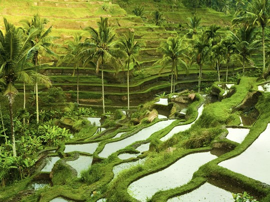 Admirez les rizières de Candidasa, installées au milieu des montagnes