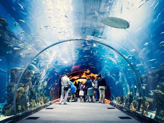 Le Dubaï Mall et son gigantesque aquarium