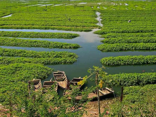 Plantation près de Battambang