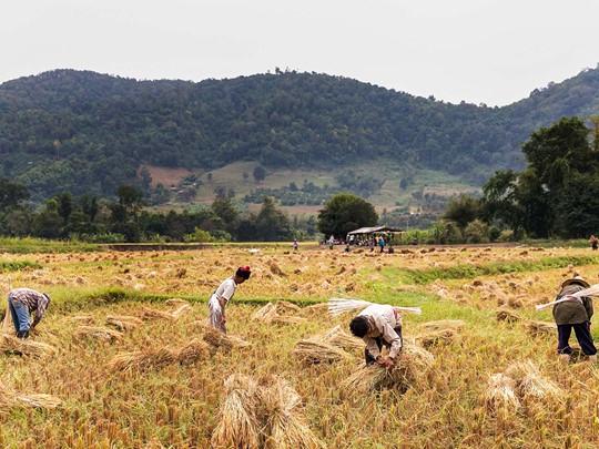 Découvrez la culture et l'artisanat de Mae Kampong