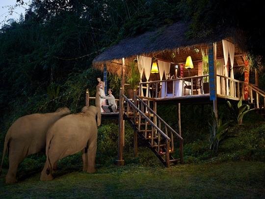 Vivez au coeur d'un merveilleux sanctuaire d'éléphants, à l'Anantara Golden Triangle