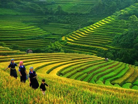 Balade à la découverte des plus grandes rizières en terrasse de la région de Sapa