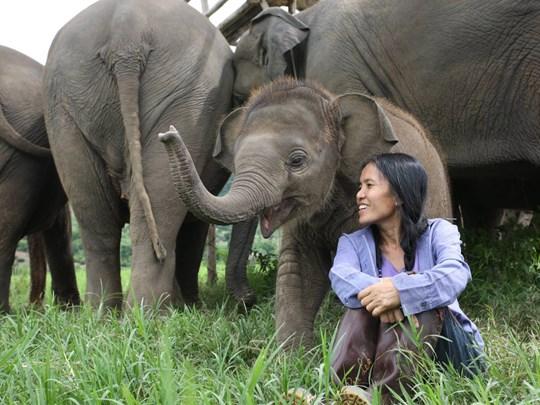Elephant Nature Park à Chiang Mai