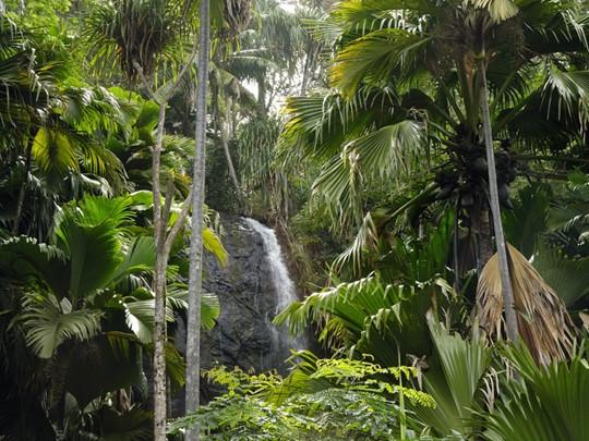 Visite de la Vallée de Mai, un véritable jardin d'Eden célèbre pour abriter des cocotiers de mer connus comme les coco-fesses