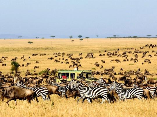 Migration dans le parc de Serengeti en Tanzanie