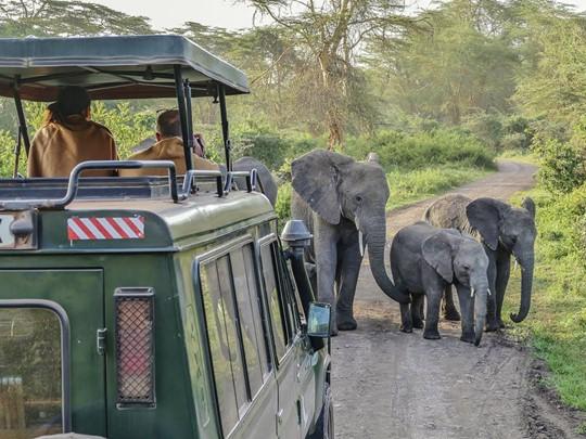 Rencontrez les éléphants du cratère du Ngorongoro