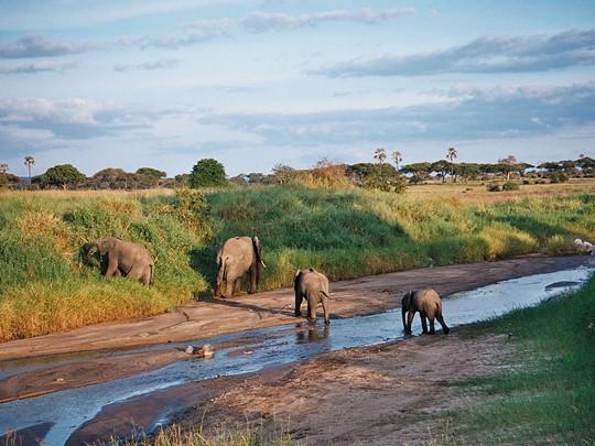 Les seigneurs du Parc de Tarangire : Les éléphants