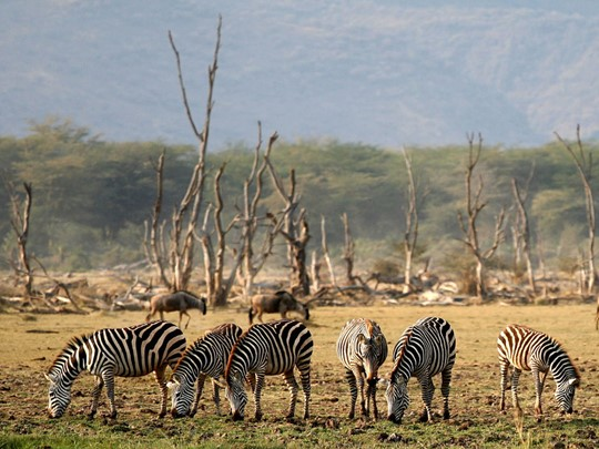 Le Parc National du lac Manyara en Tanzanie