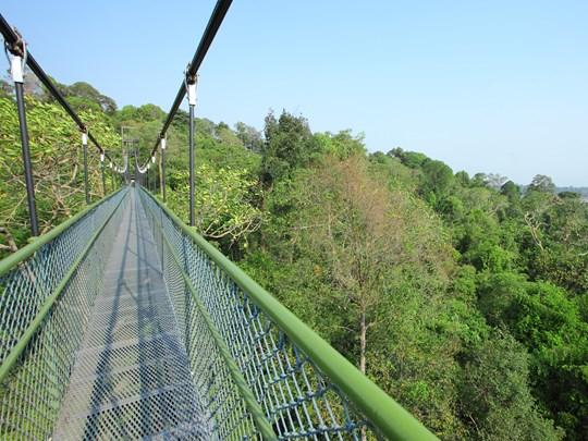 La TreeTop Walk dans une superbe réserve naturelle