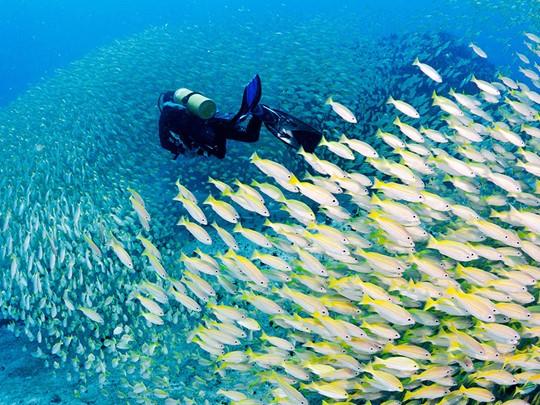 Les amateurs de plongée sous-marine pourront partir à la découverte de la richesse des fonds marins