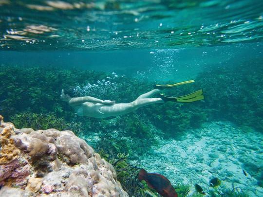 Découverte des fonds marins d'une richesse exceptionnelle pour les passionnés de plongée sous-marine et de snorkeling