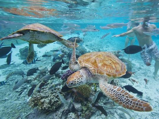 Découvrez des fonds marins foisonnants de vie