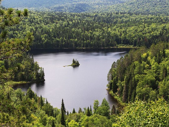 Des forêts à perte de vue