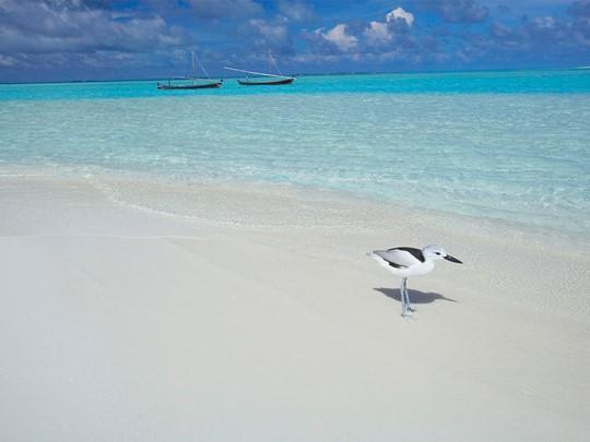 Découvrez les oiseaux marins