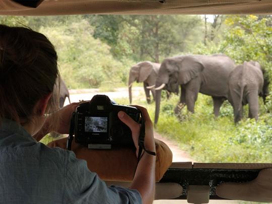 Rencontre avec les éléphants dans le Parc Manyara