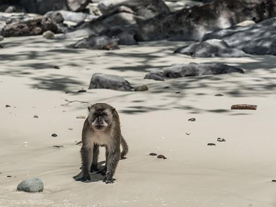 Des surprenants petits singes vous accueilleront