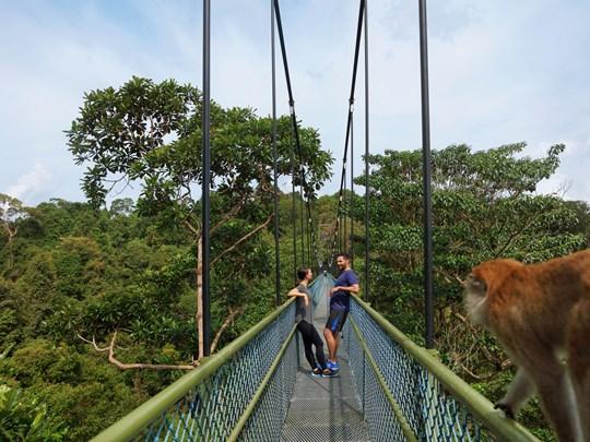 Découvrez le Macritchie Reservoir & arpentez le TreeTop Walk