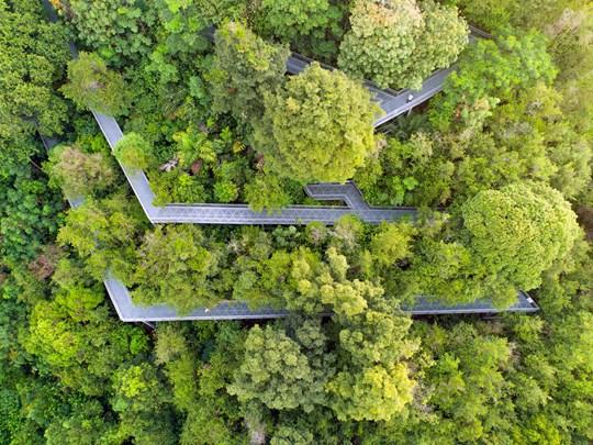 Le Southern Ridges est un endroit idéal pour explorer la nature de Singapour
