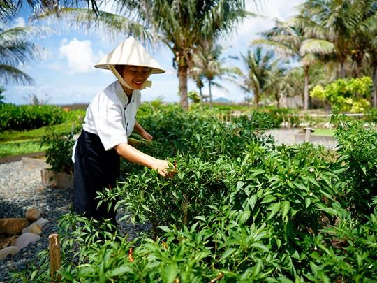 Le jardin organique de l'hôtel