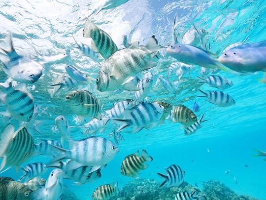 Explorez dans les fonds marins qui entourent le Sofitel Bora Bora