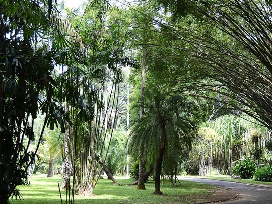 Jardin botanique de Peradeniya
