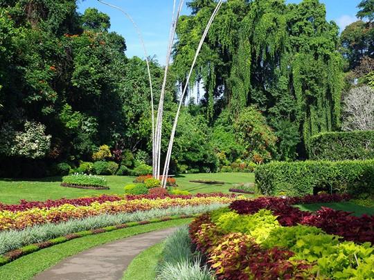 Le jardin botanique de Peradeniya