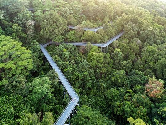 Outre les buildings, Singapour déploie une nature foisonnante